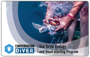 Sea Turtle Certification