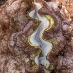 Even the more resilient species of Giant Clams were completely white