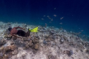 Maldives Bleaching