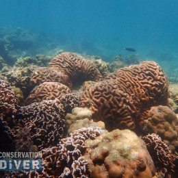Recovered reefs